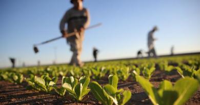 Attività agricole e agriturismi